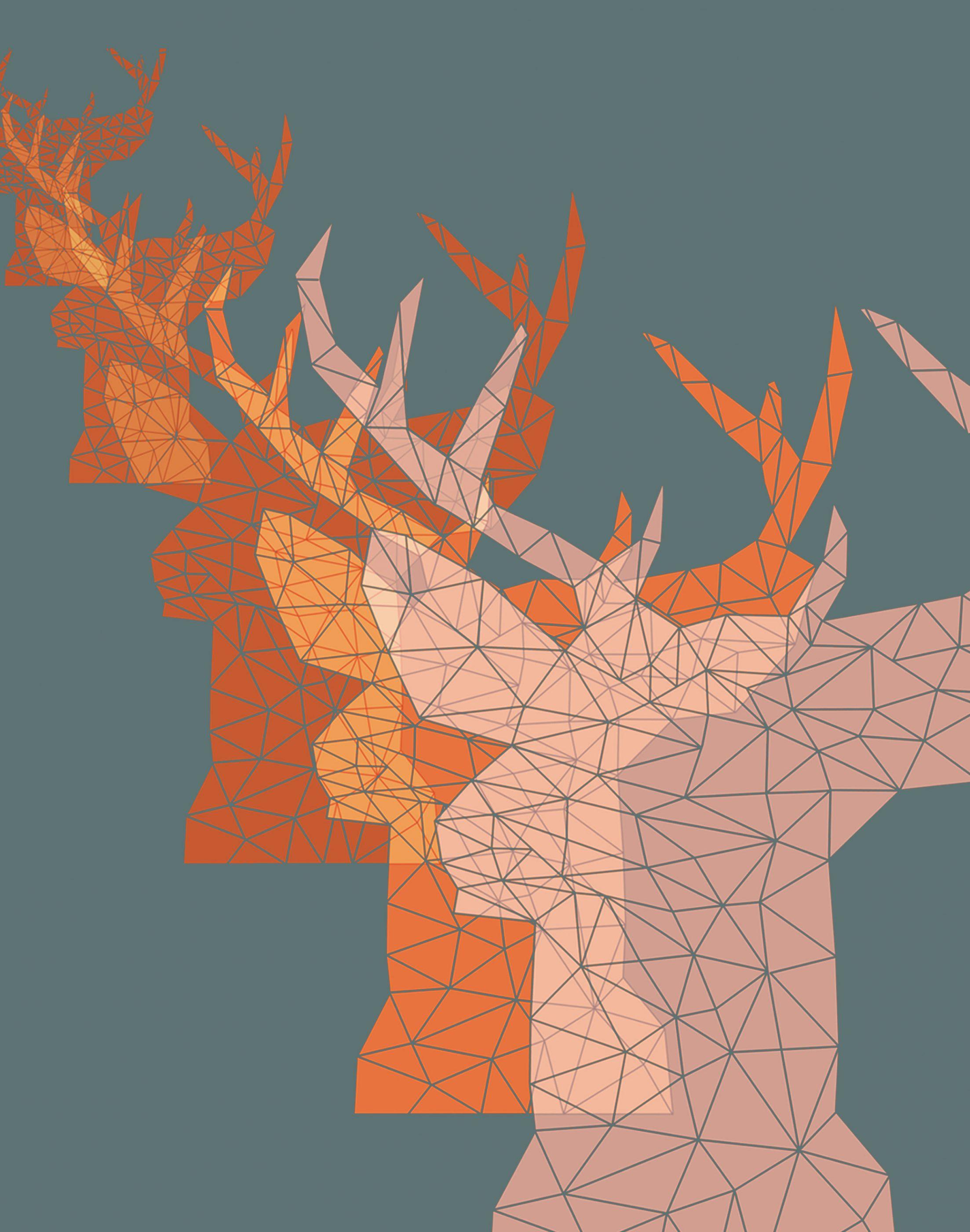 Dear deers